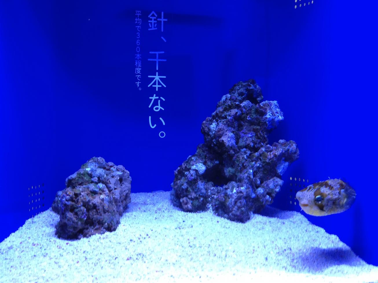 Sumida012