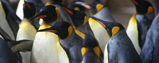 Penguin title